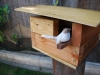 birdhouse-bird-sitting