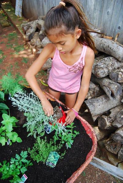 herb-garden-plant-herbs
