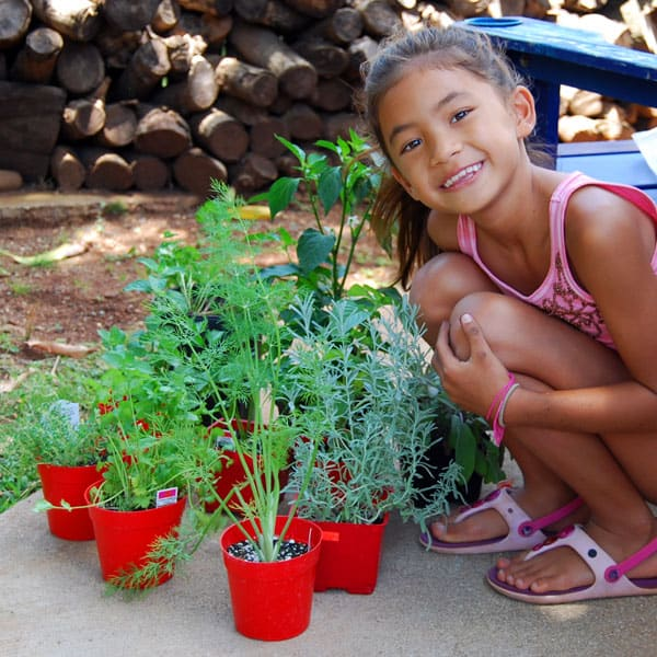 herb-garden-rosemary-mint-parsley