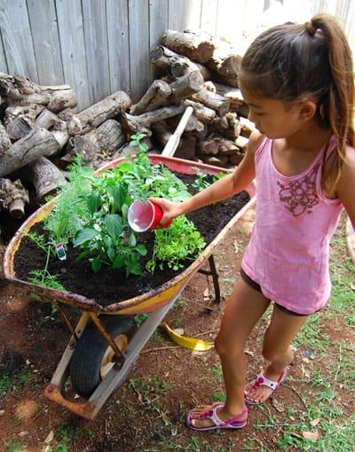 herb-garden-watering