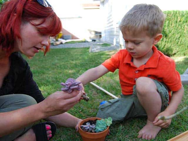 Easy Gardening – Planting Succulents With Your Kids