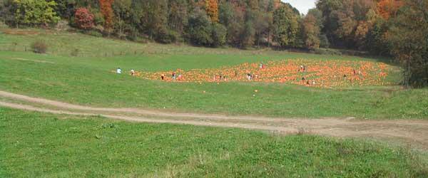 pumpkin-patch-drive