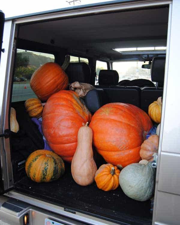 pumpkin-trunk