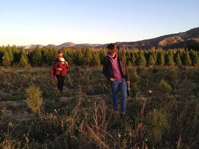 A Family Tradition: Cutting the Christmas Tree