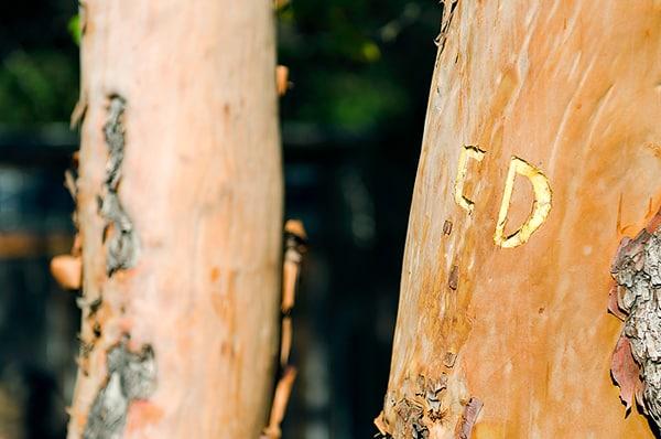 initials-in-tree