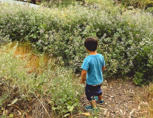pick wildflowers